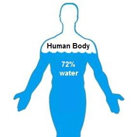 Water-in-human-body-chart